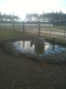 PP in mud